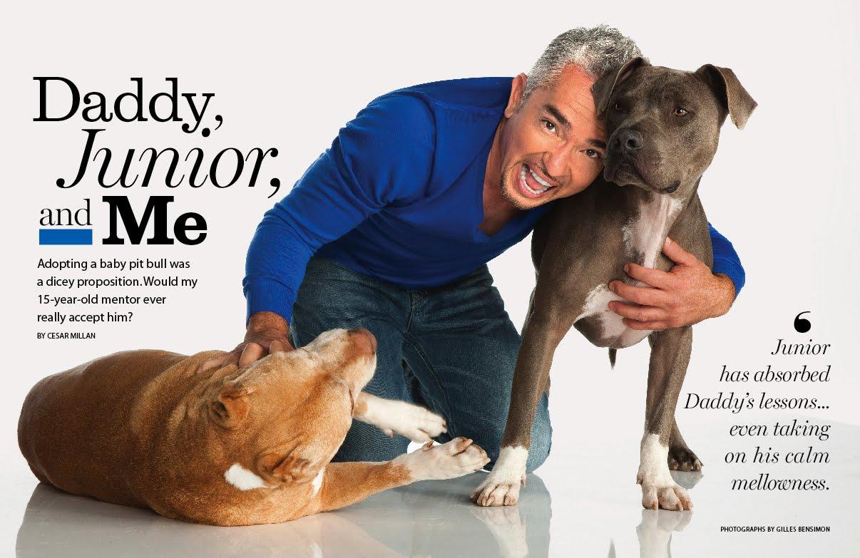 Cesar S Dog Junior