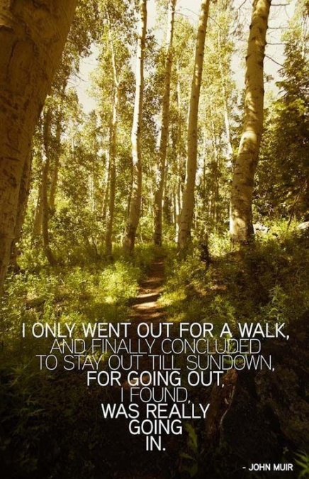 john muir quotes on trees quotesgram