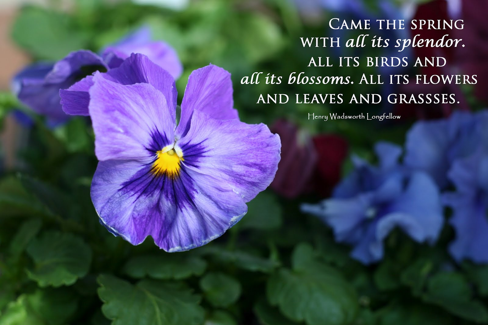 Spring Quotes: Welcome Spring With Birds Quotes. QuotesGram