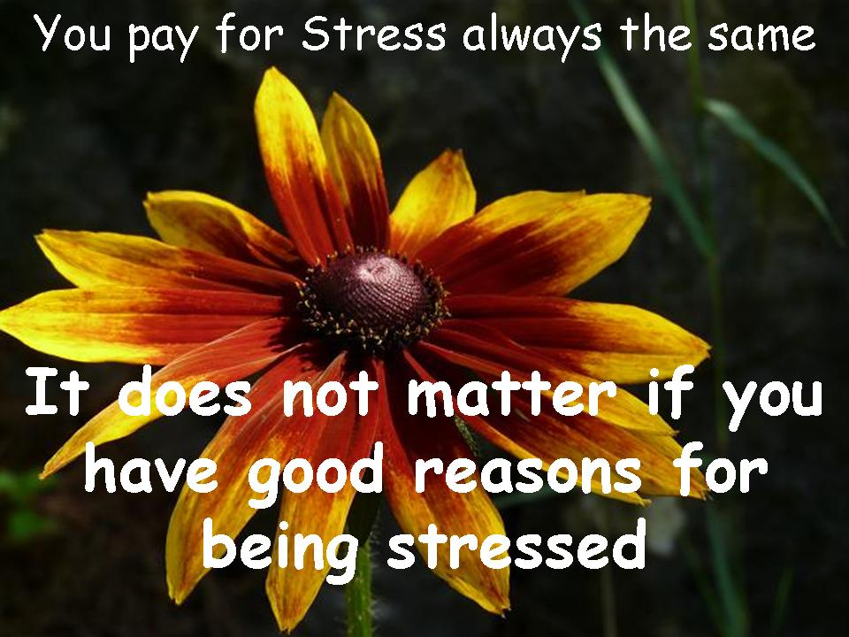 Funny Quotes Stress Management. QuotesGram