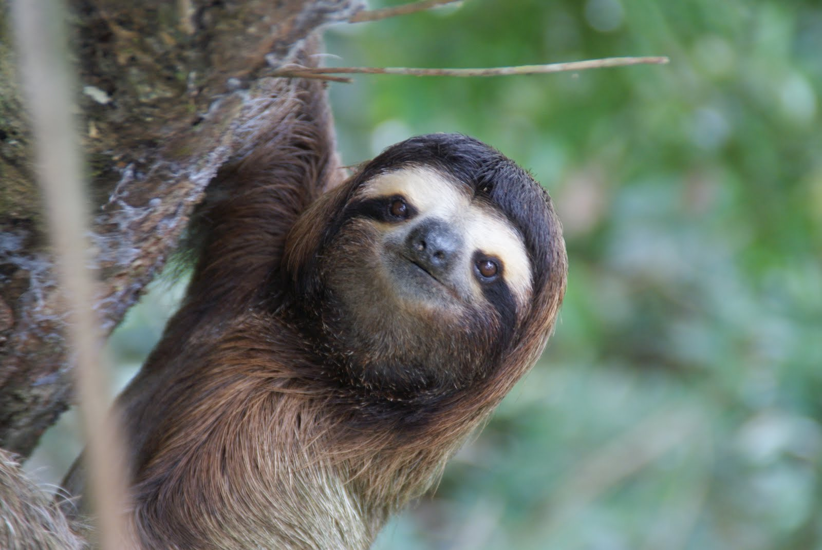Positive quotes with cute sloths quotesgram - Funny sloth pics ...