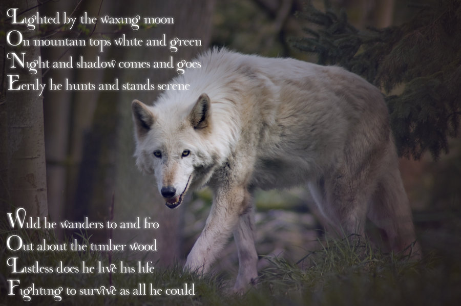 Lone Wolf Poems And Quotes Quotesgram