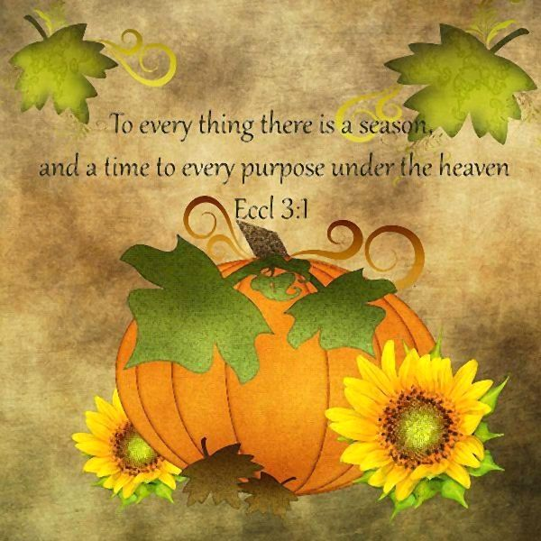 Inspirational Quotes On Pinterest: Fall Food Quotes. QuotesGram