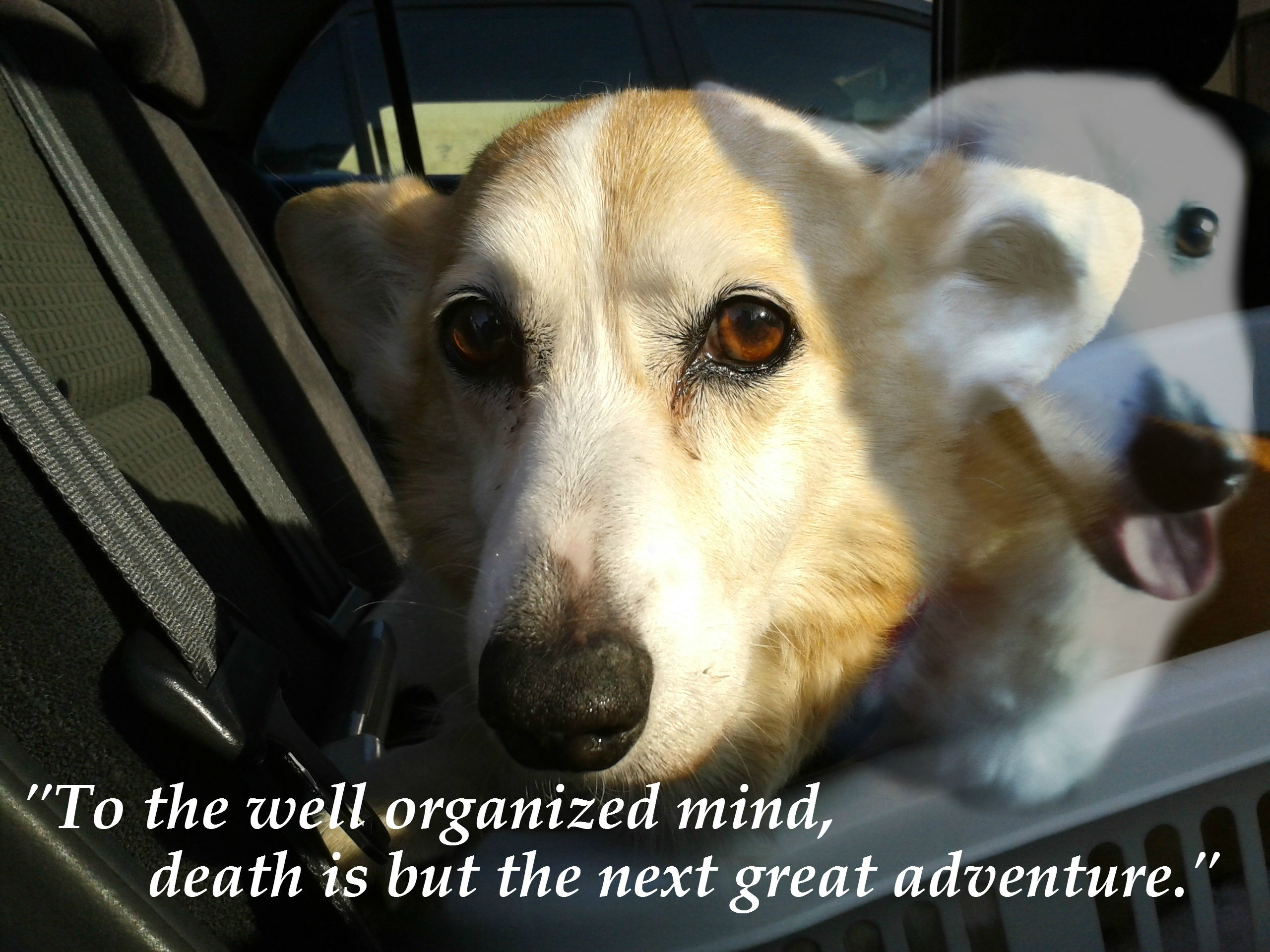 saying goodbye to dog quotes  quotesgram