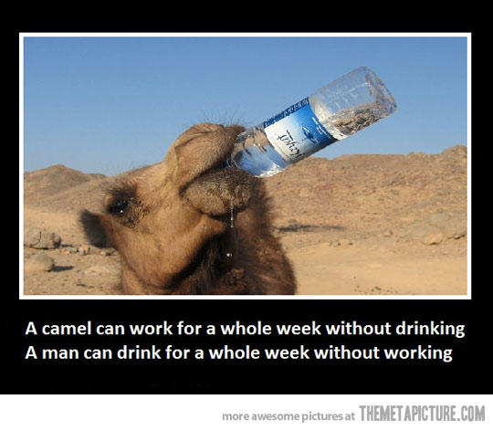 Drunk Quotes Funny Animal Quotesgram: Funny Quotes About Drinking Water. QuotesGram