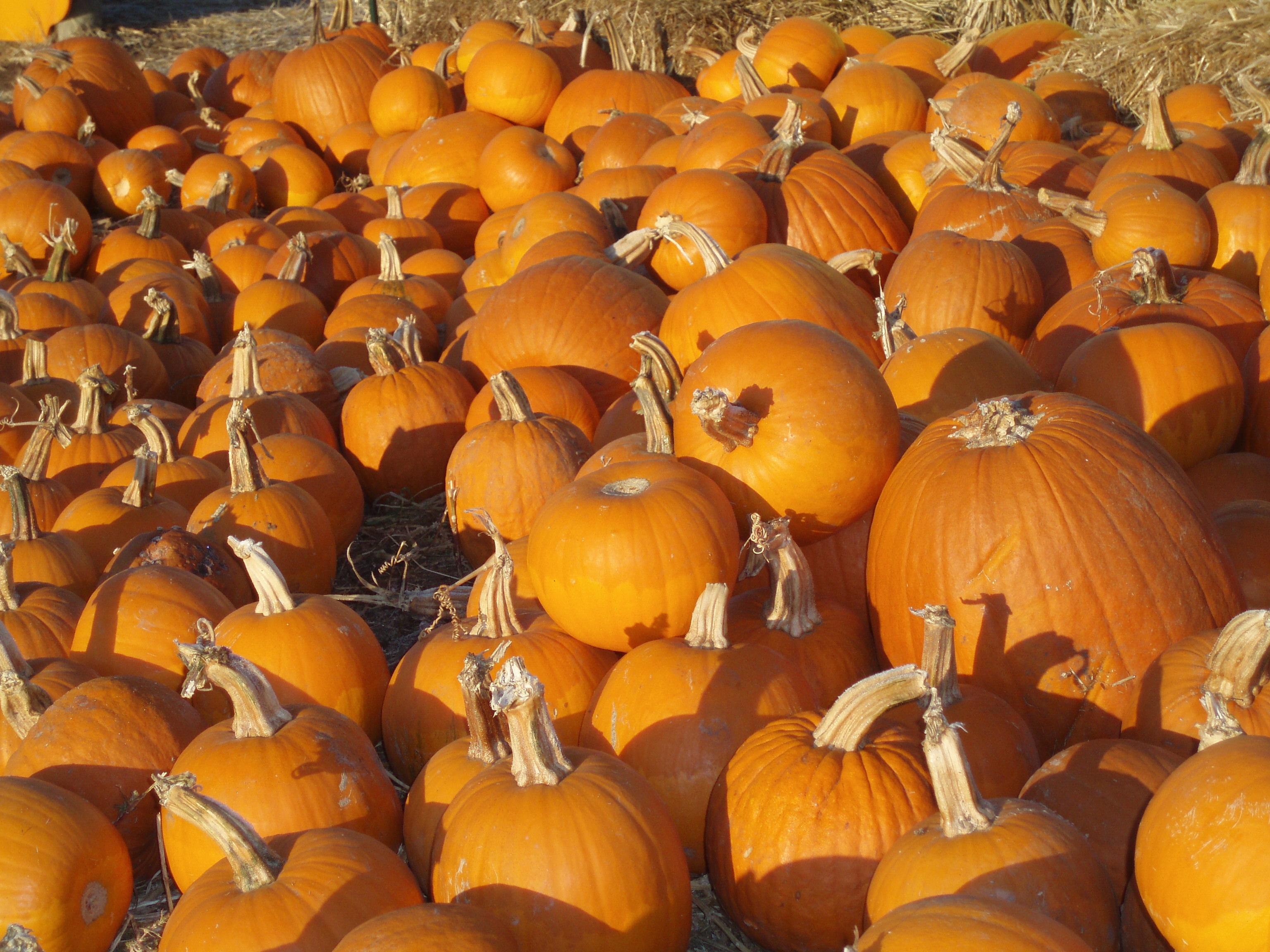 Quotes About Pumpkin Patches. QuotesGram