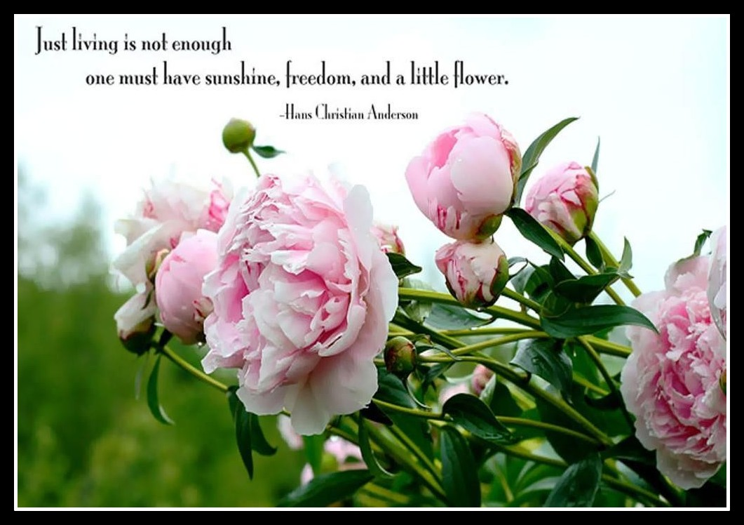 Good Morning Quotes With Roses : Good morning quotes with roses quotesgram