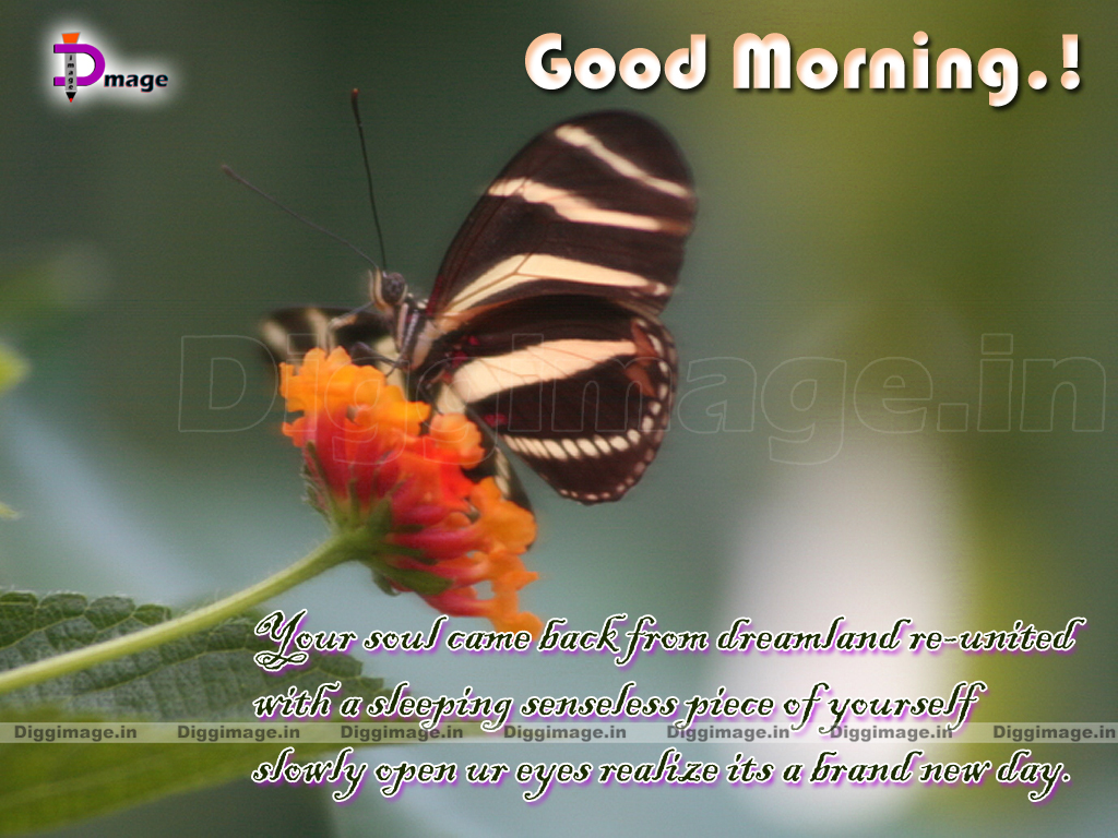 Morning Greeting Quotes Quotesgram