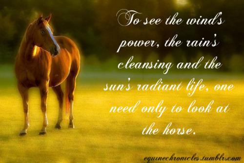 Horse And Rider Quotes. QuotesGram