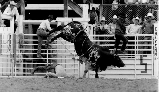Funny Bull Riding Quotes: Famous Bull Rider Quotes. QuotesGram