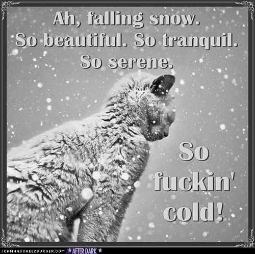 Cold Rainy Day Quotes: Rain Cold Funny Quotes. QuotesGram