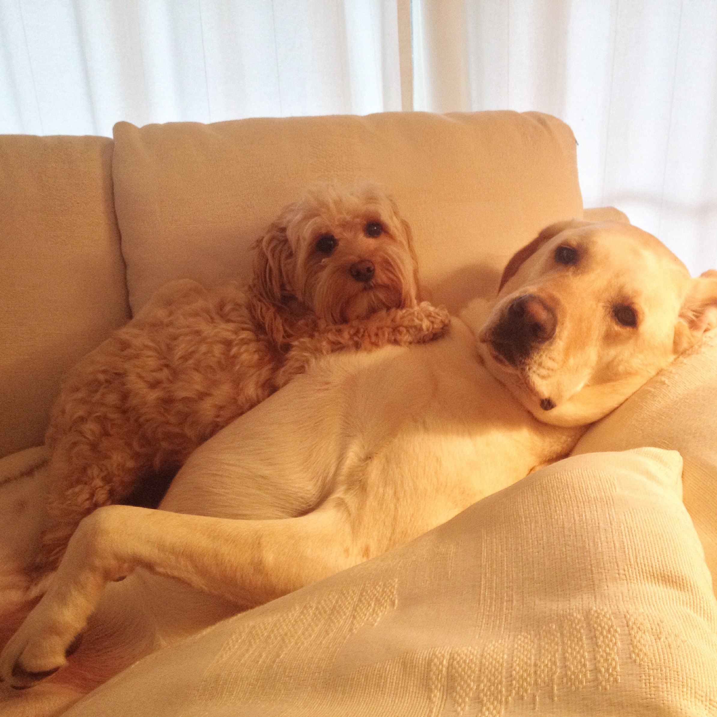 I Want To Cuddle With You Quotes: Cuddling Dogs Quotes. QuotesGram