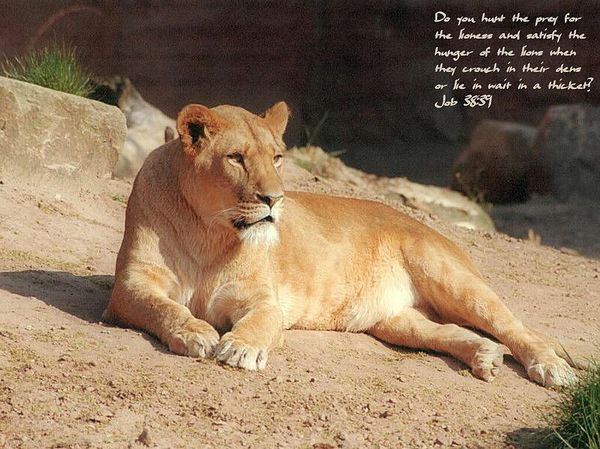 Lioness quotes women - photo#37