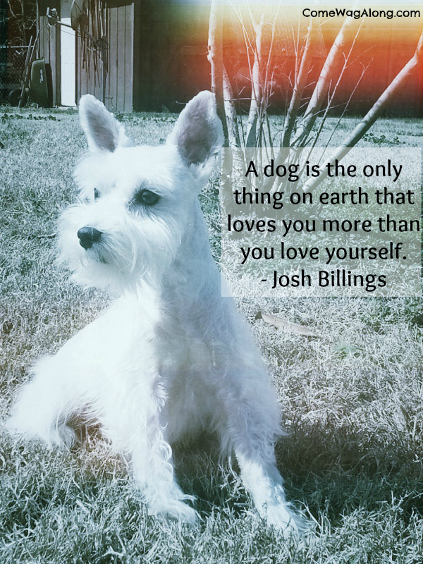 Dog companionship quotes quotesgram for Best dogs for companionship