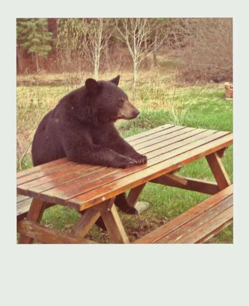 Yogi Bear Quotes Picnic Basket: Yogi Bear Quotes Picnic. QuotesGram