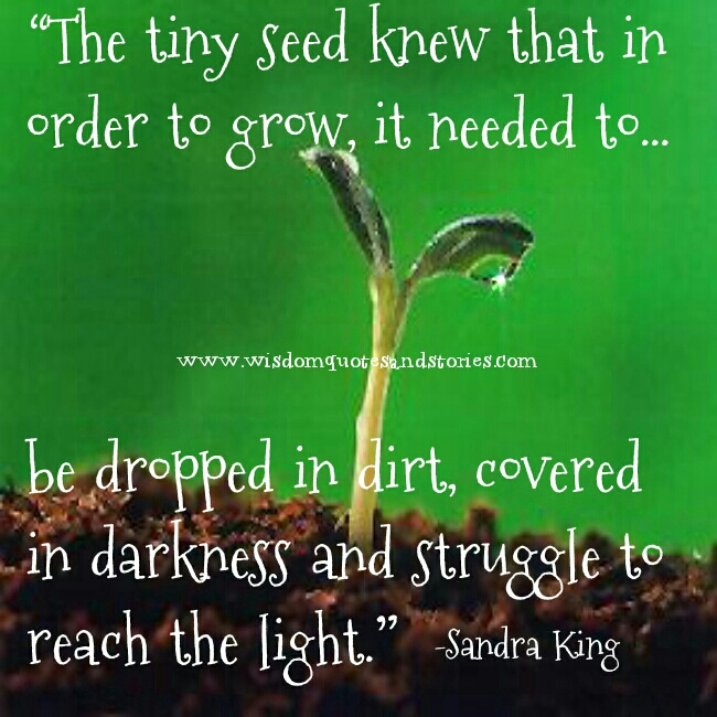 Quotes About Teachers Planting Seeds: Quotes Growing Seeds. QuotesGram