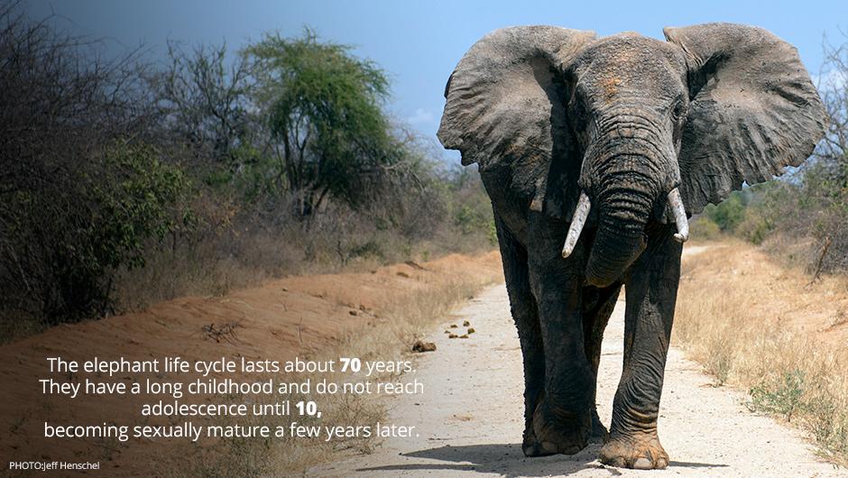 funny elephant sayings