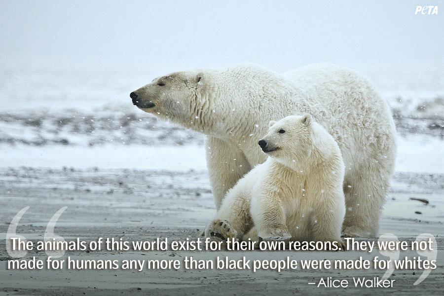 Polar Bear Funny Quote...
