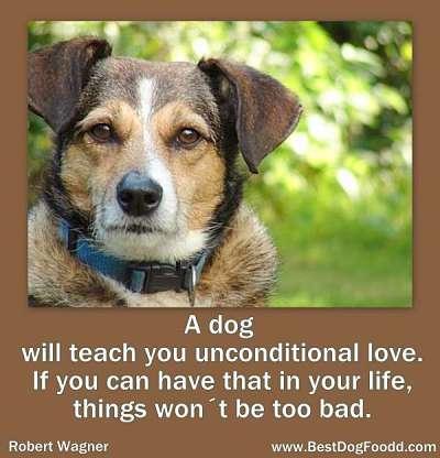 Dog Tribute Quotes. QuotesGram