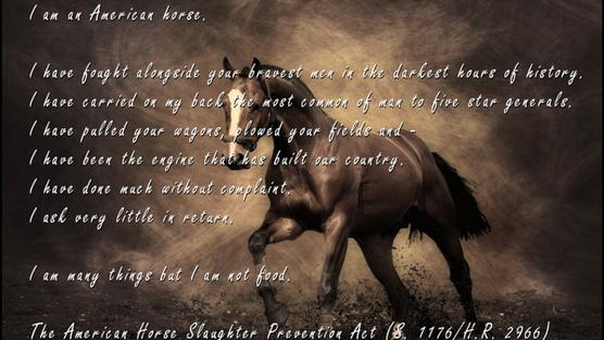 Wild At Heart Quotes Quotesgram: Wild Horse Quotes. QuotesGram