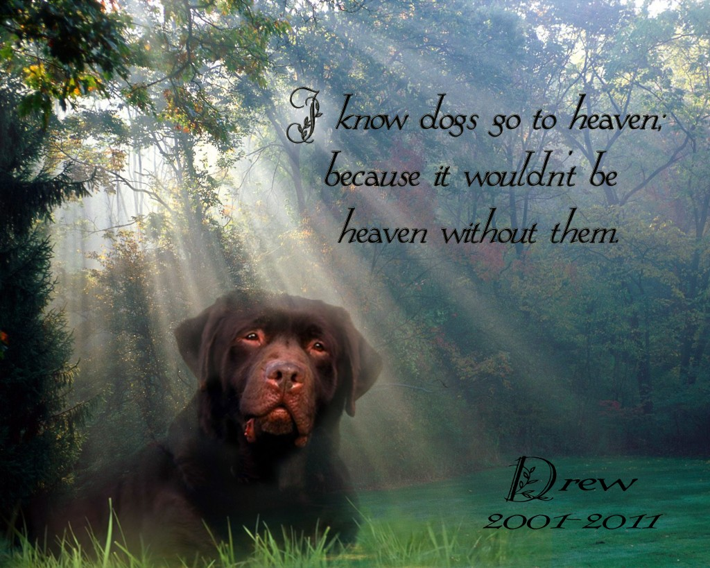 When A Dog Dies Quotes Quotesgram: For Dogs That Died Quotes. QuotesGram