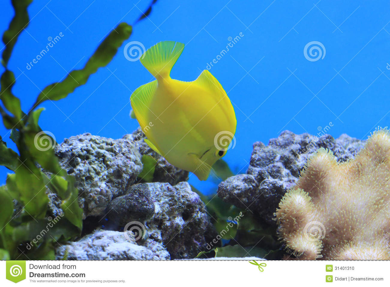 Fish aquarium quotes - Tropical Quotes Fish Quotes