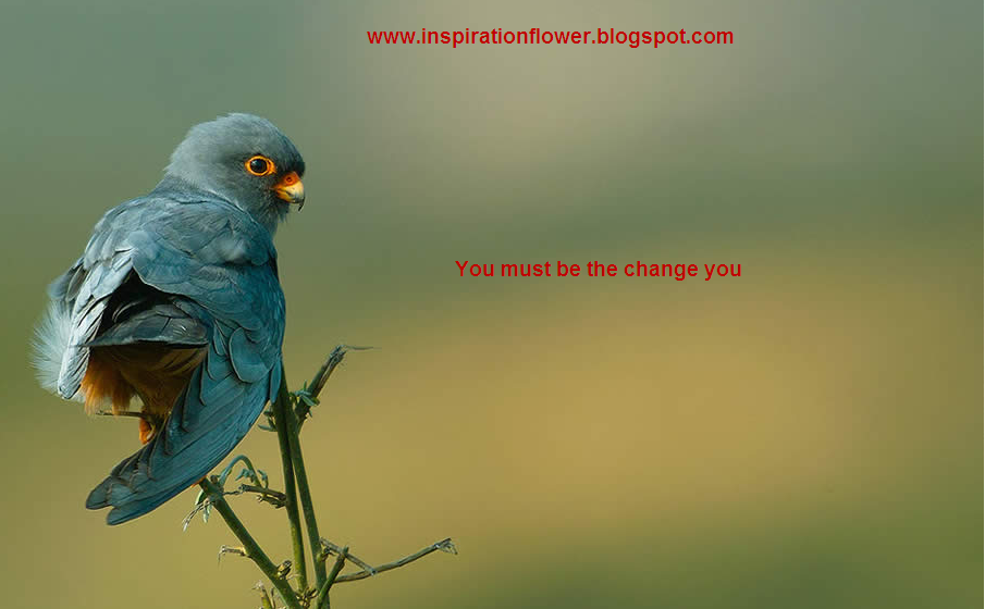 Quotes About Love And Birds Quotesgram: Inspirational Quotes About Birds. QuotesGram