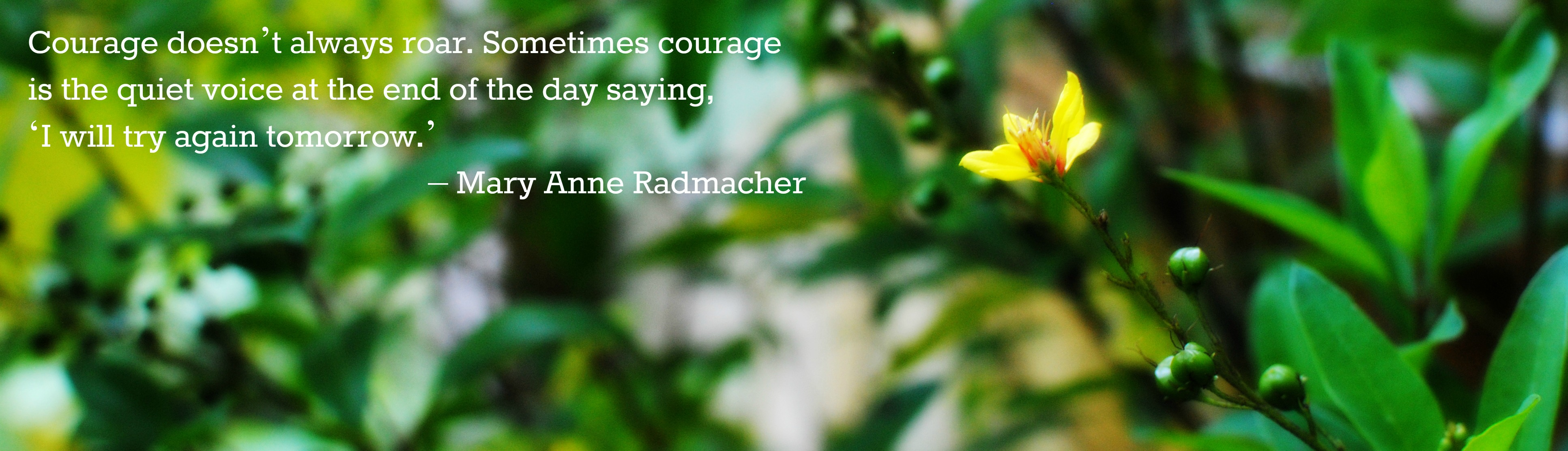 Quotes About Yellow Flowers Quotesgram