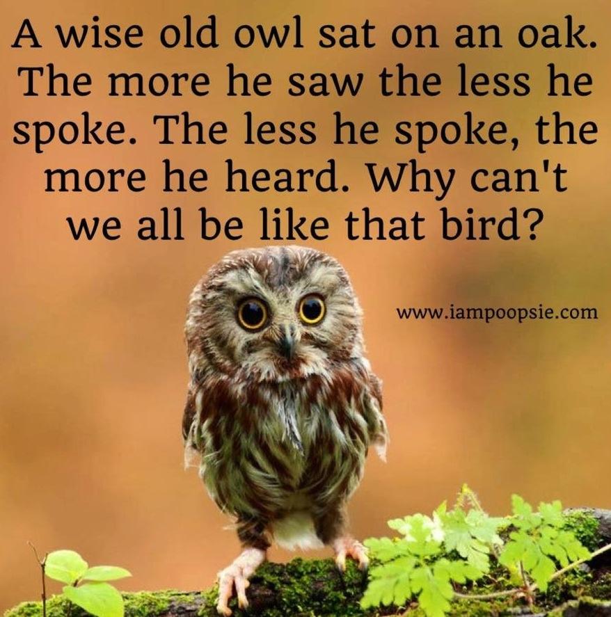 Funny Inspirational Quotes Wisdom: Owl Wisdom Quotes. QuotesGram
