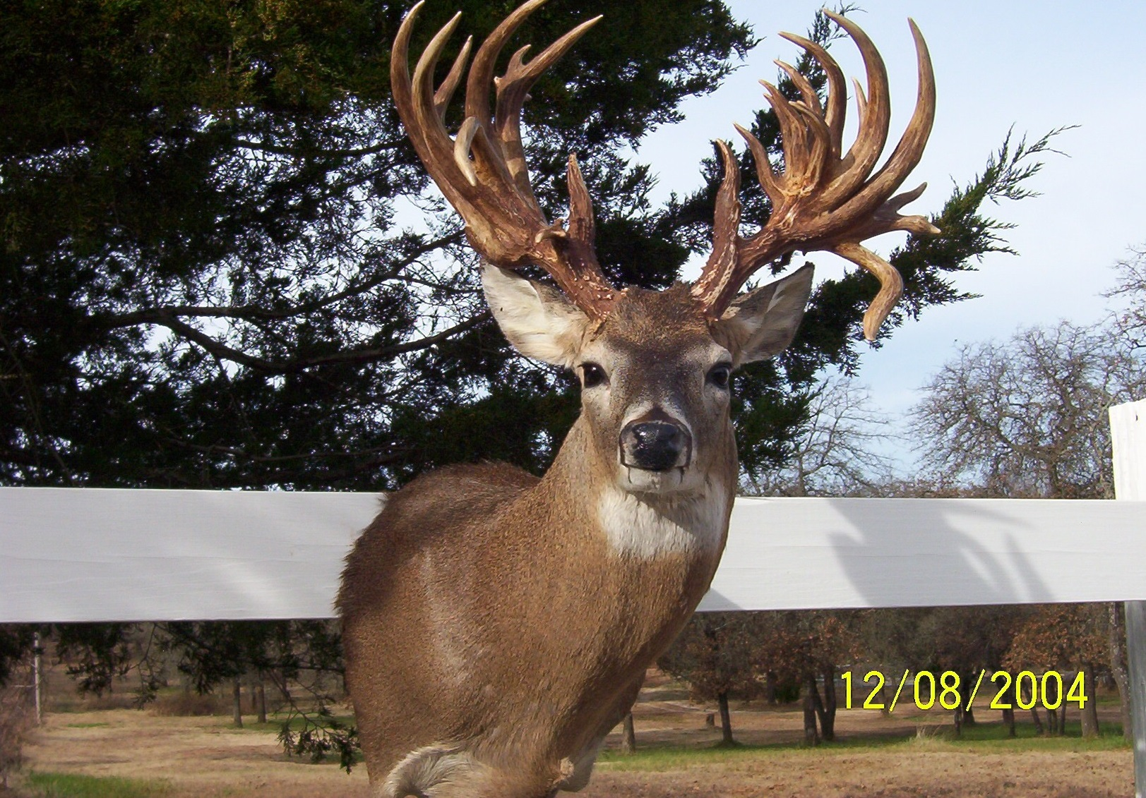 Whitetail Deer Hunting Quotes. QuotesGram