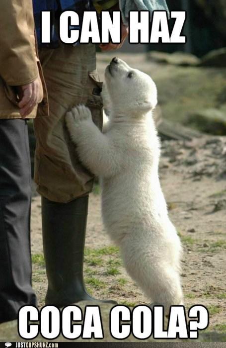 Funny polor bear peeing