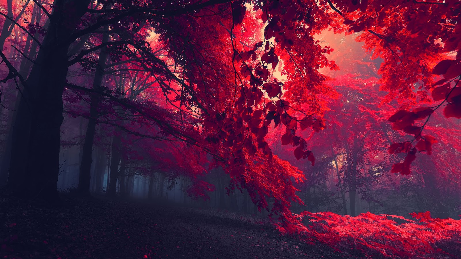 Red Leaves Quotes Quotesgram