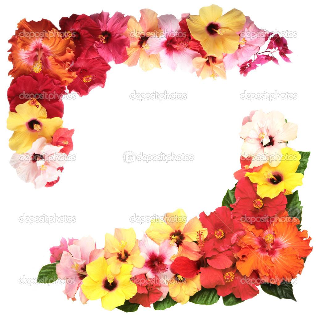Hibiscus Flower Love Quotes. QuotesGram