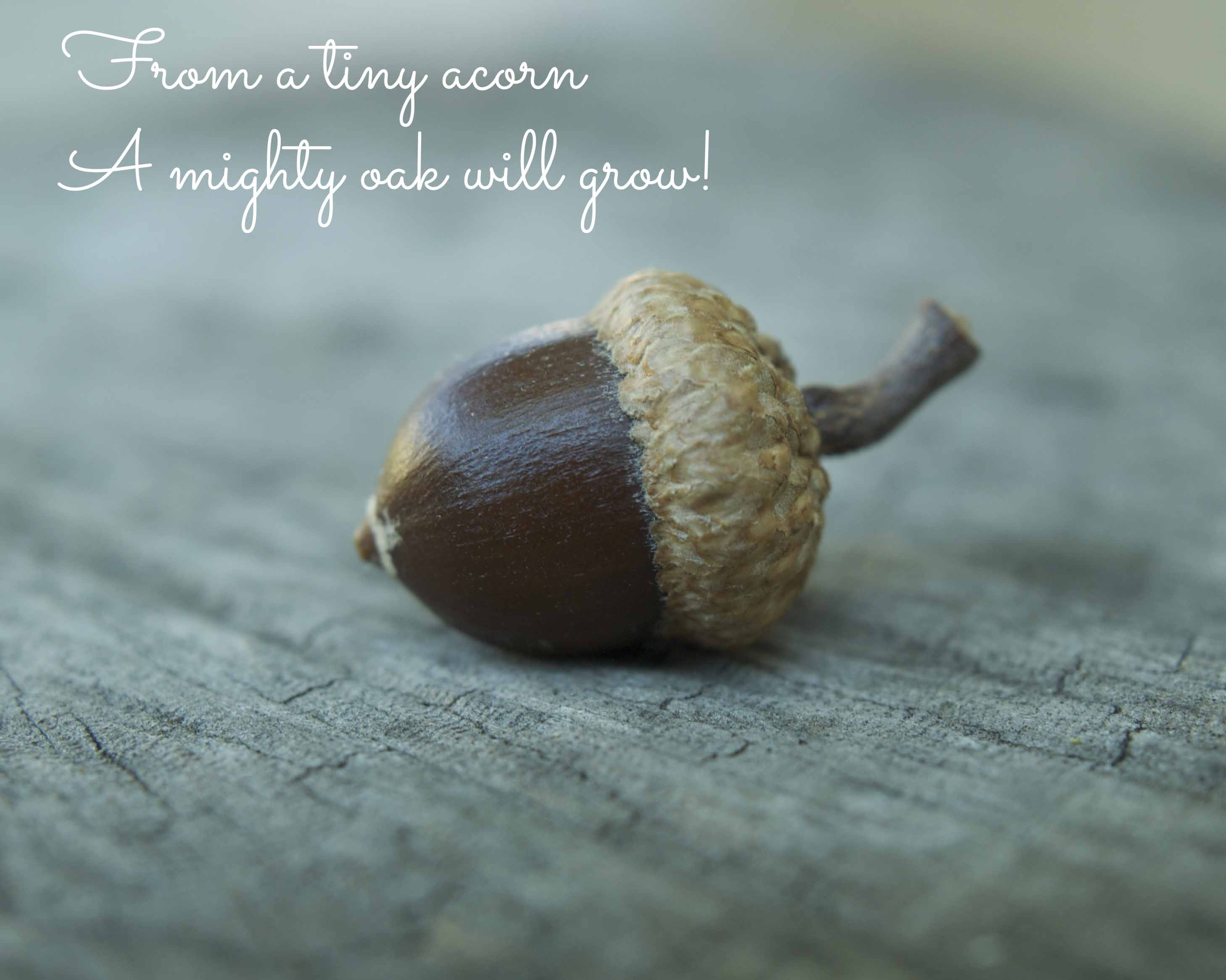 Acorn Quotes About Seedlings. QuotesGram