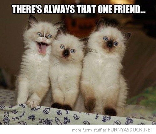 Friendship Quotes Cats: Crazy Friendship Quotes Funny. QuotesGram