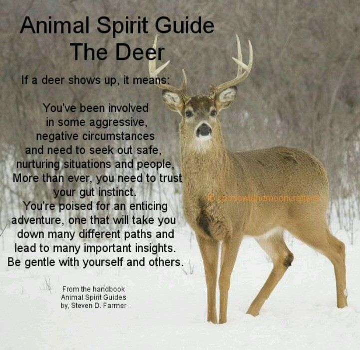Animal Guide: Quotes About Animal Deer. QuotesGram