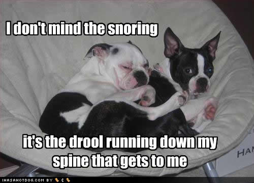 Funny Quotes About Snoring: Drooling Quotes. QuotesGram