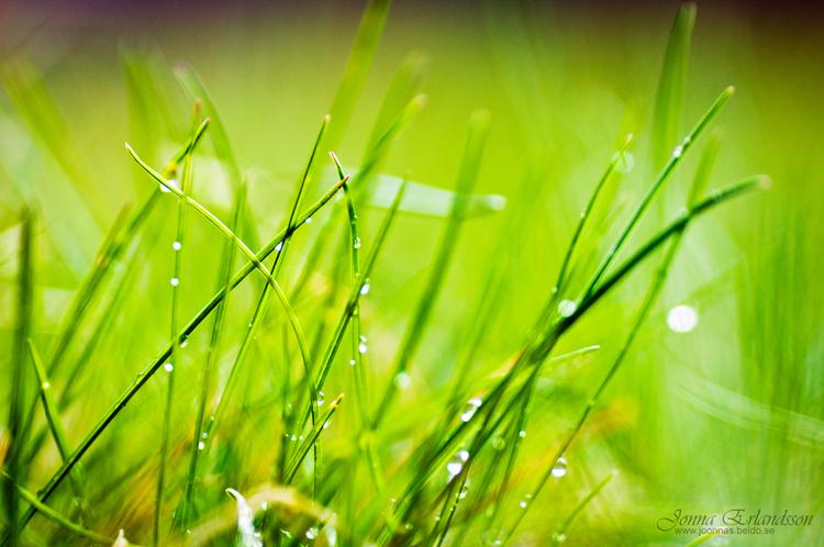 spring rain quotes  quotesgram