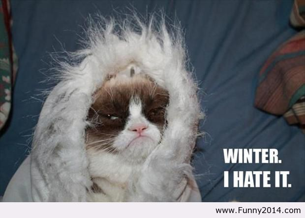 Winter Weather Funny Quotes. QuotesGram