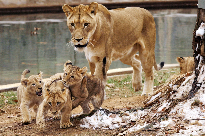 Фото пар животных с их детьми