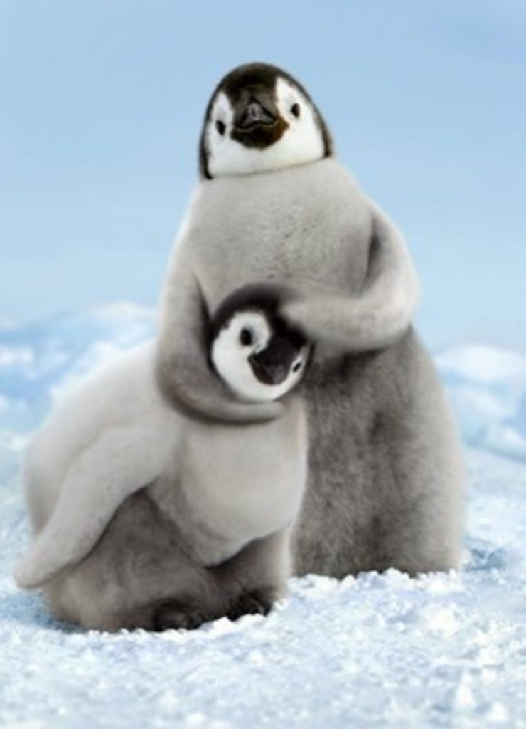Cute Baby Penguins Quotes Quotesgram