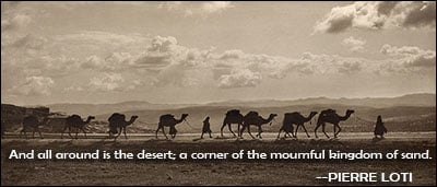 funny quotes about desert quotesgram