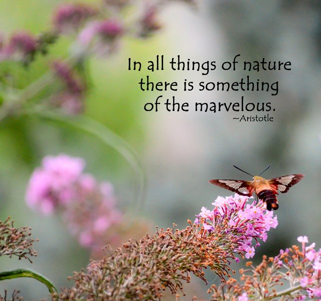 Quotes And Sayings: Hummingbird Quotes And Sayings. QuotesGram