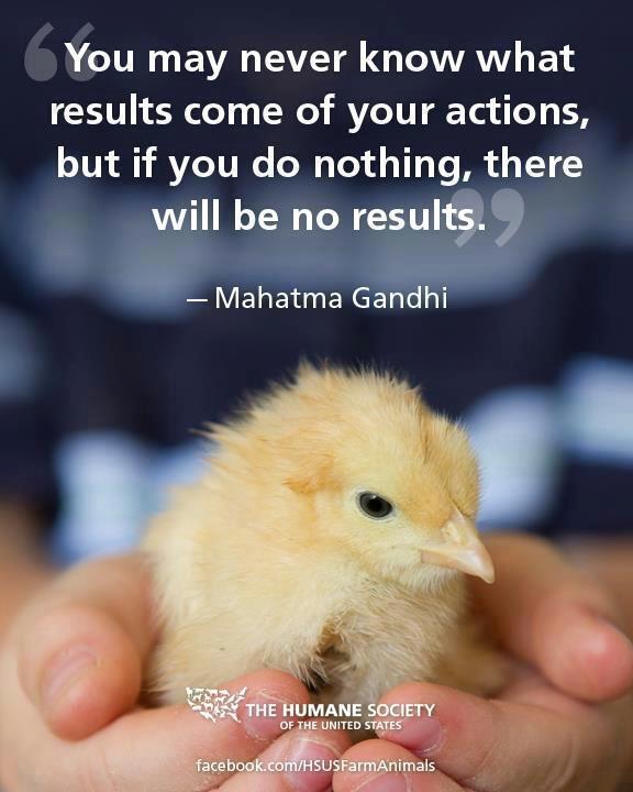 Vegan Quotes Gandhi. QuotesGram