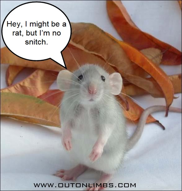 Tattletales At Work Quotes: Quotes About Being A Rat. QuotesGram