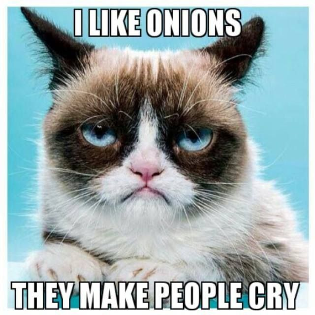 Frozen Grumpy Cat Quotes Quotesgram