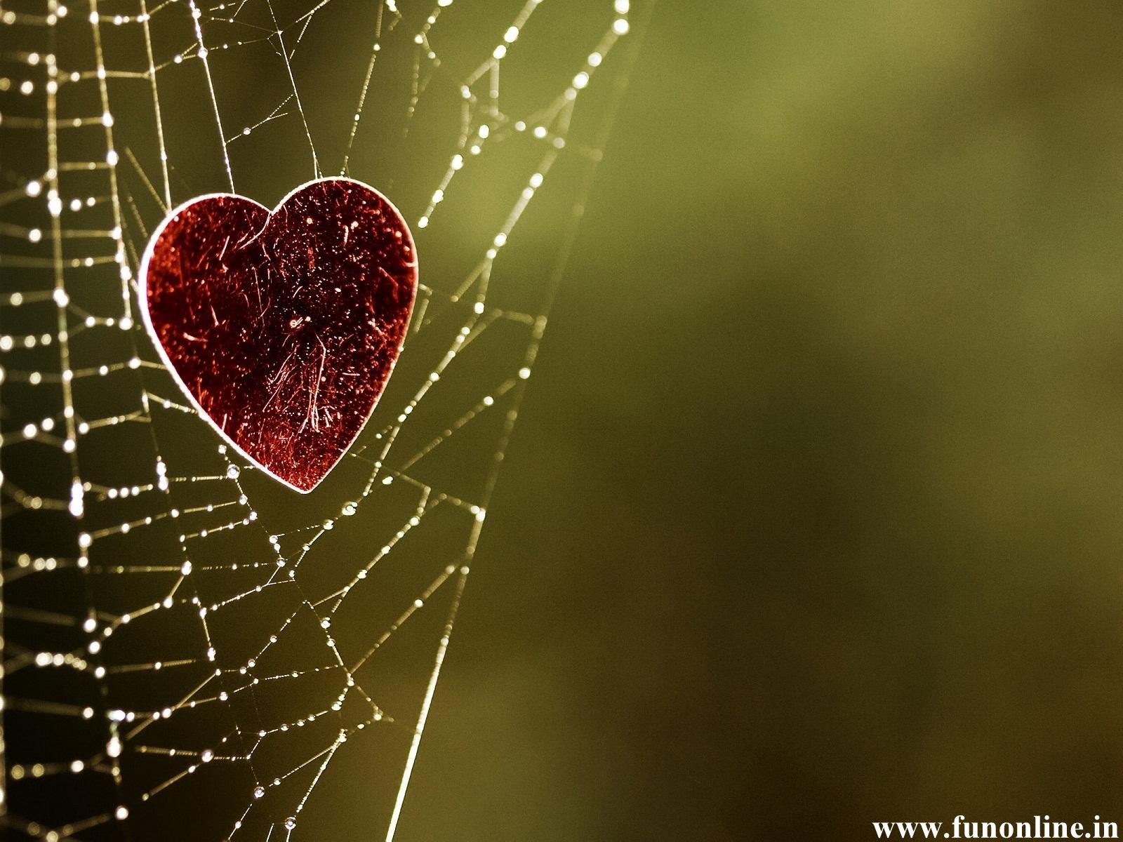 Spider Web Love Quotes. QuotesGram