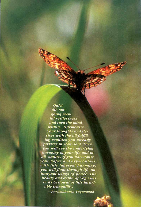 Butterfly Strength Quotes. QuotesGram
