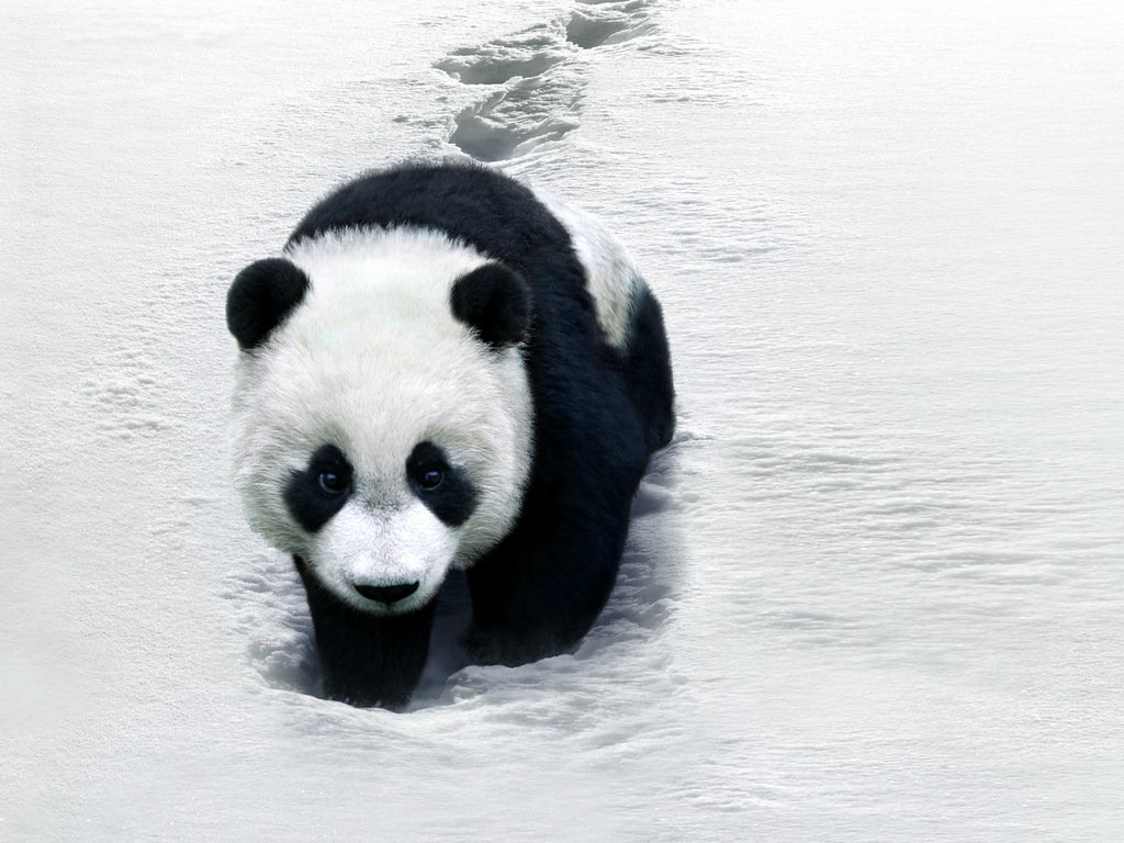 Panda Bear Quotes And Sayings. QuotesGram The Most Beautiful Black Baby In The World