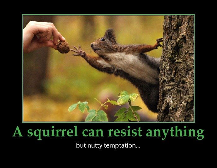 Funny Quotes About Temptation Quotesgram